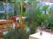 amon_luxor_hotel_breakfast_garden