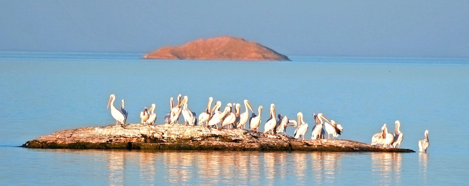 lake_nasser_cruise_egypt_wildlife