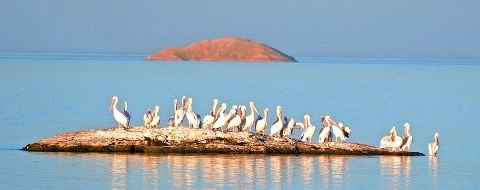 lake_nasser_cruise_egypt_wildlife