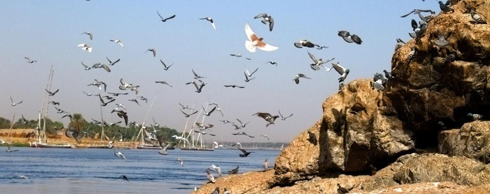 aswan_birding